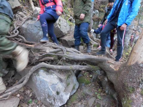 Уничтожение почвенной дернины и обнажение древесных корней