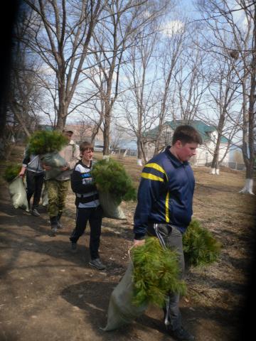 Студенты ДВФУ садят кедры